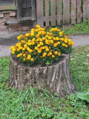 Посадка цветов в пень и чайник